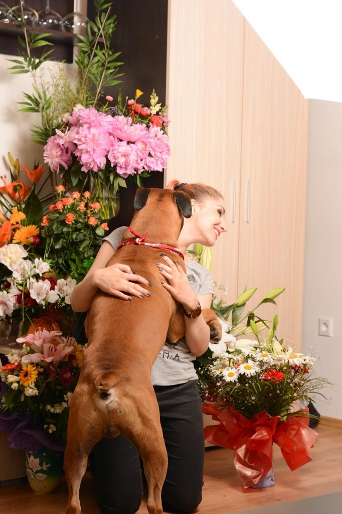 birthday hug dog