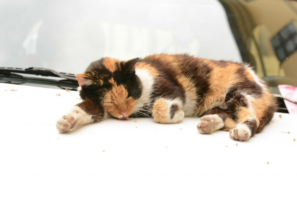 colroful cat
