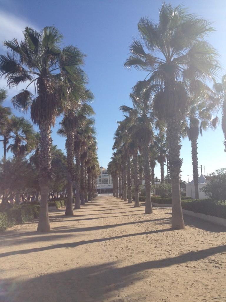 malvarosa beach palmtrees
