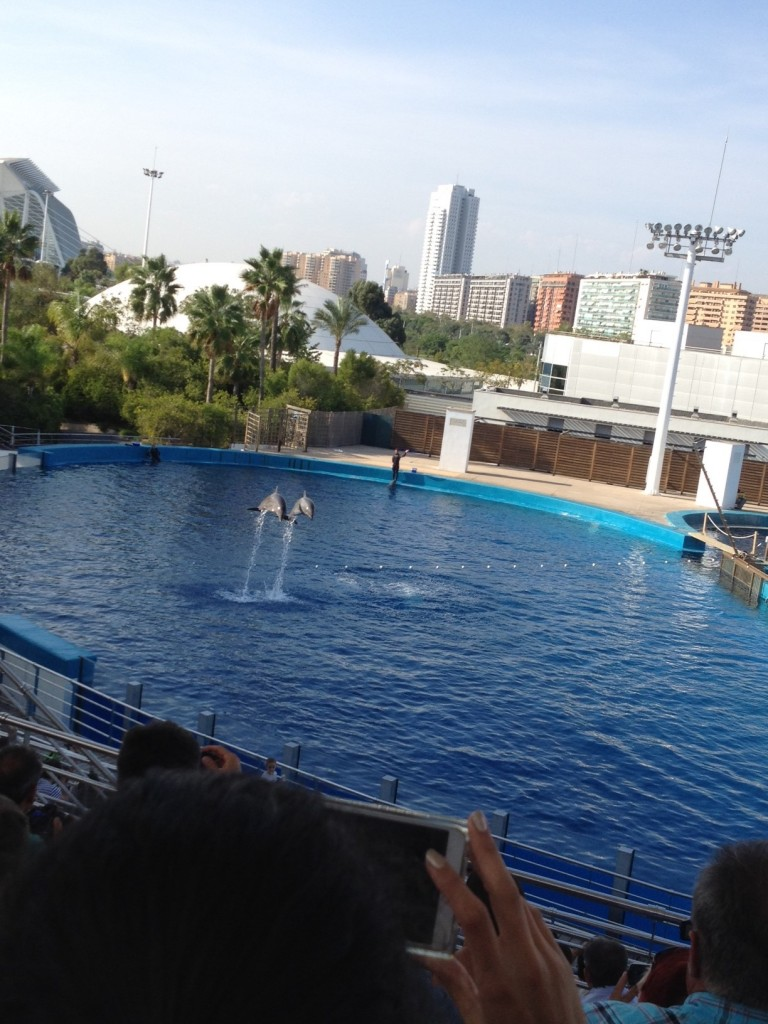 dolphins show valencia